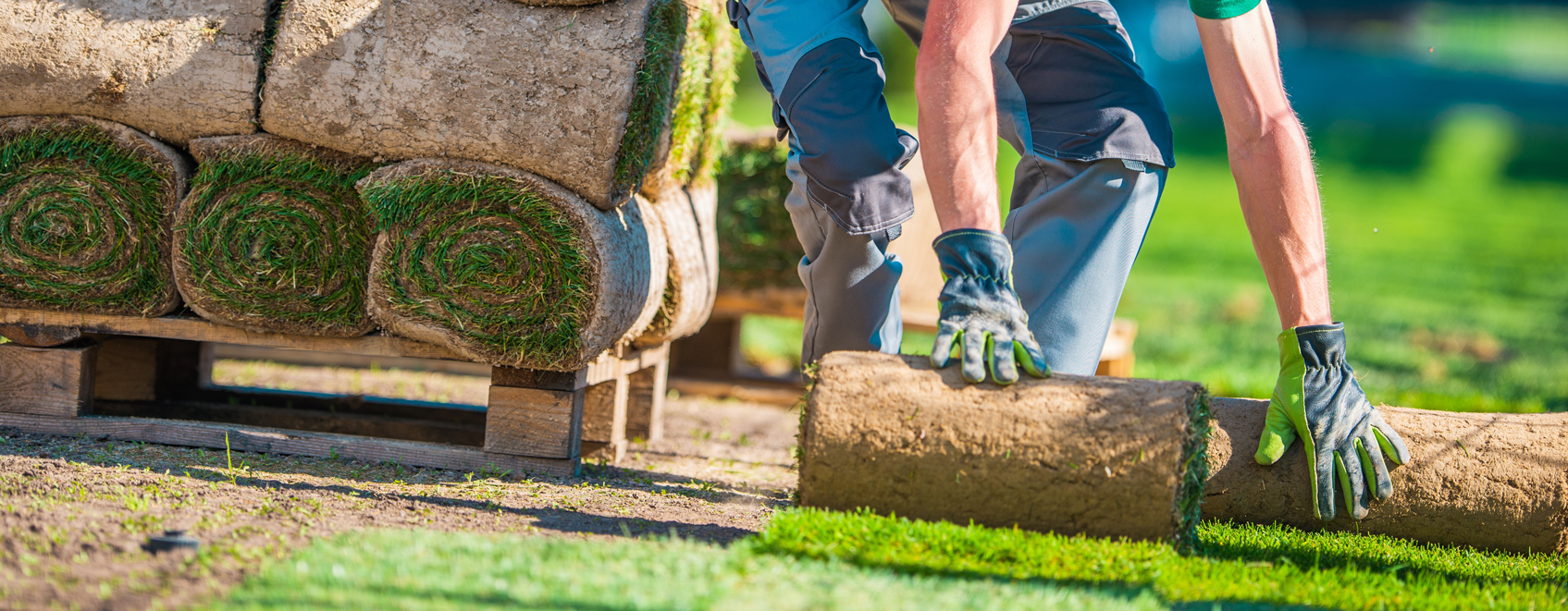 Worker rolling out sod.
