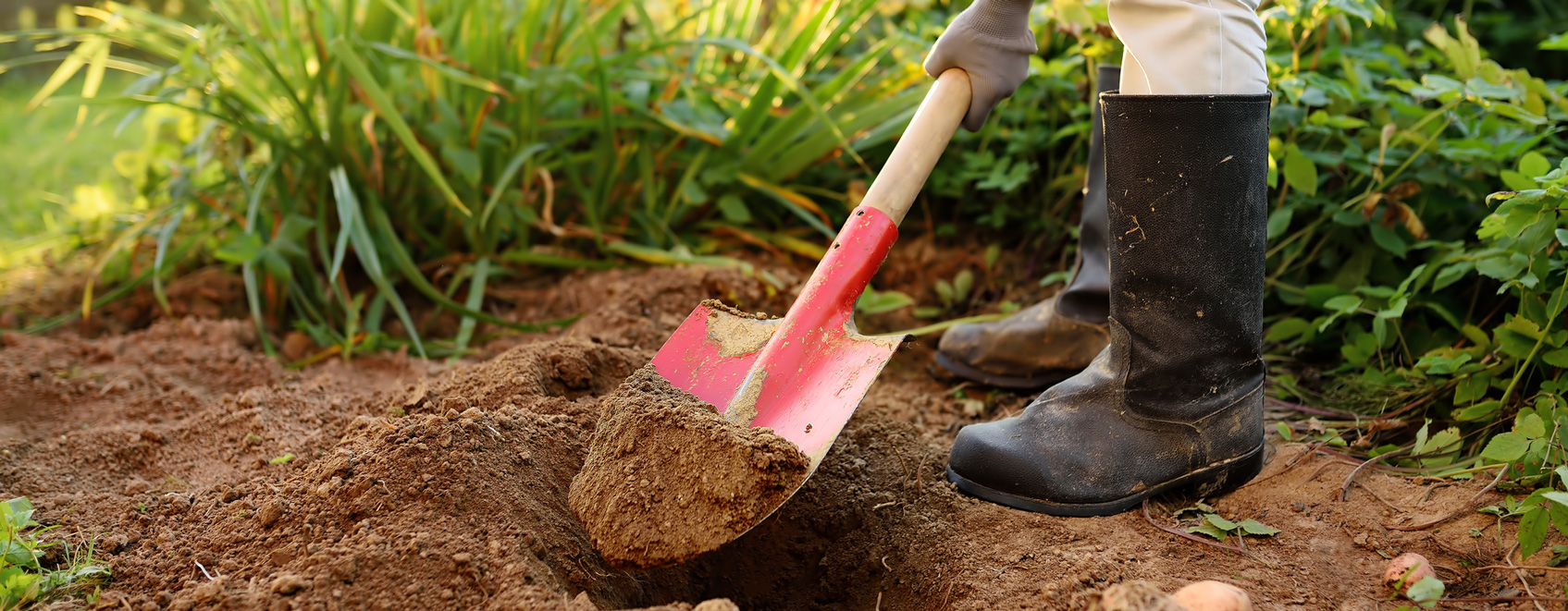 Person with work boots on digging with shovel in a yard.